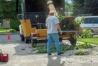 Agnes Water Tree cutting services 13