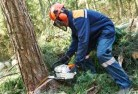 Agnes Water Tree cutting services 21